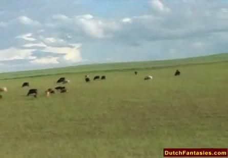 فيديو نيك بنت وقرد 18